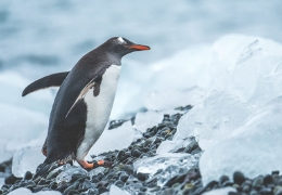 reiseberichte-alaska-laenderuebersicht-reiseblog