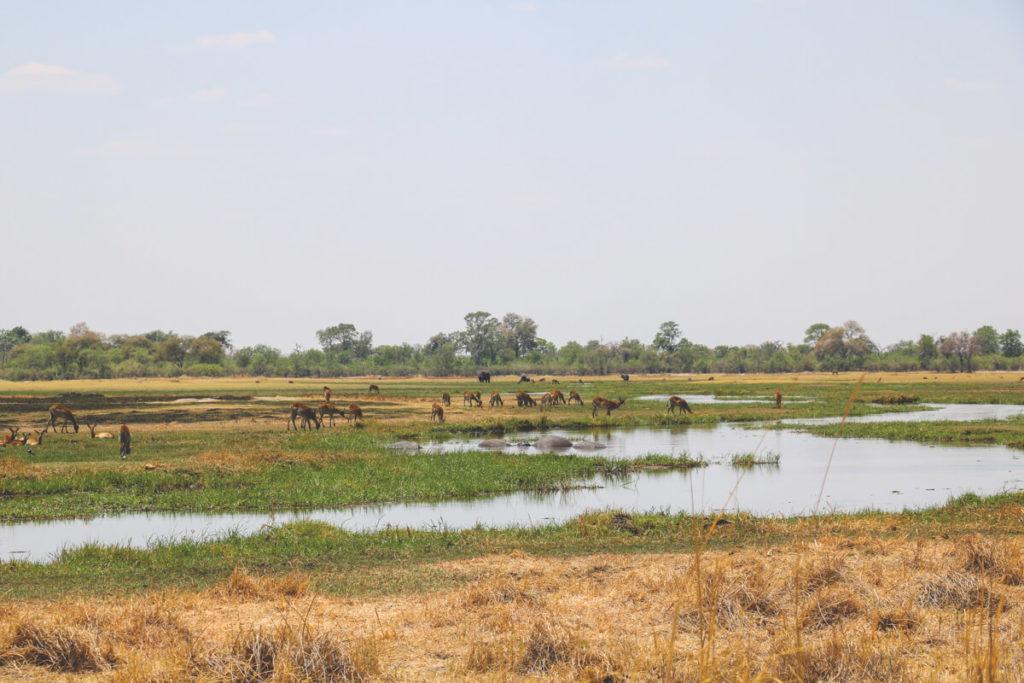 Botswana-Moremi-Game-Reserve-Antilopen-Fluss
