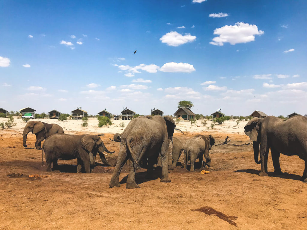 Botswana-Rundreise-Elephant-Sands-Elefanten