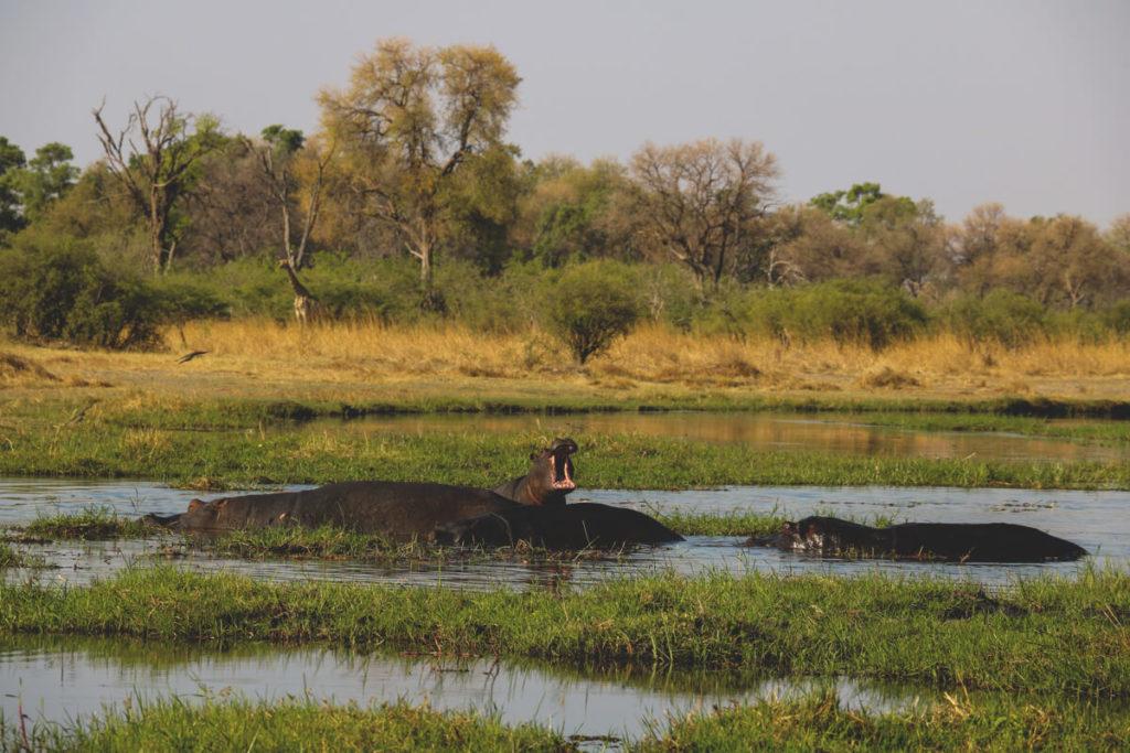 Botswana-Rundreise-Nilpferd-Fluss-Moremi-Game-Reserve
