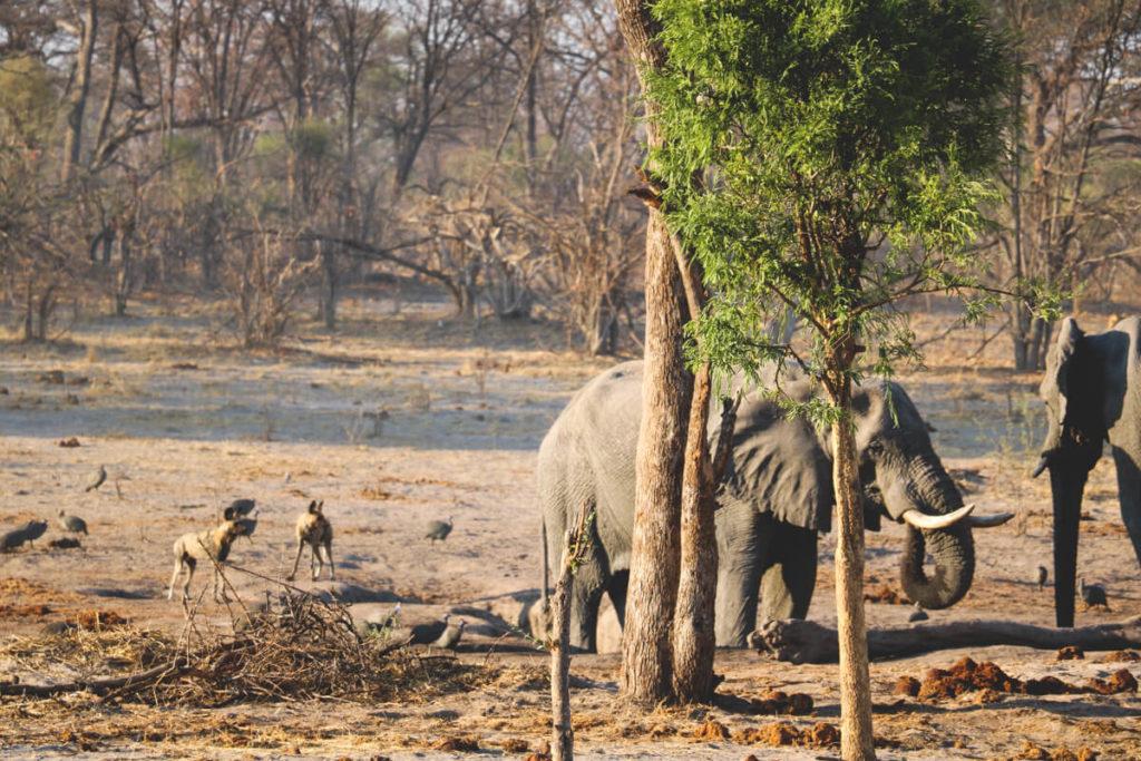 Botswana-Rundreise-Wildnis-Elefanten-Wildhunde