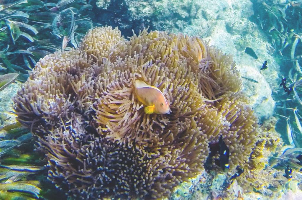 Sansibar-Rundreise-Schnorcheln-Korallen
