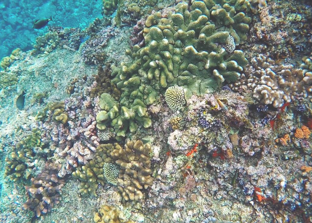Unterwasserwelt-Banda-Neira-Tauchen-Schnorcheln