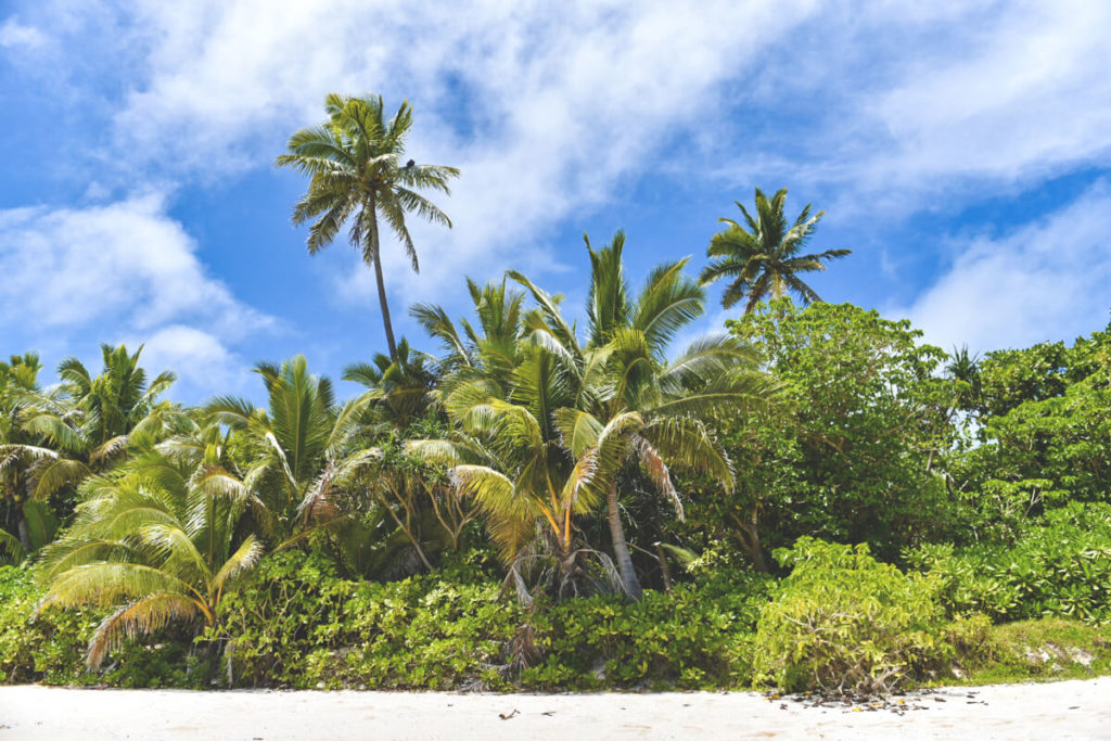 tonga-reise-strand-palmen