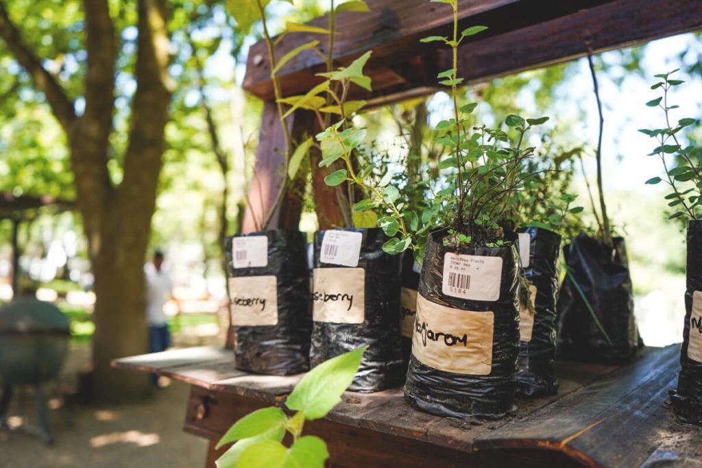 Winelands-suedafrika-boschendal-kraeutergarten