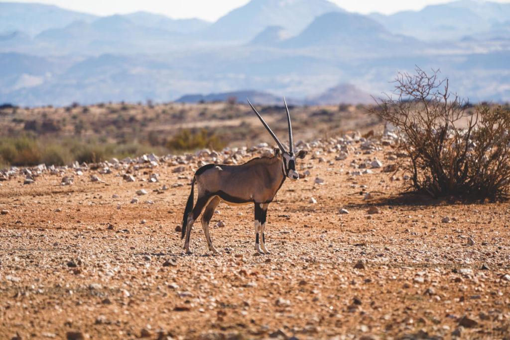 augrabies-falls-national-park-suedafrika-game-drive
