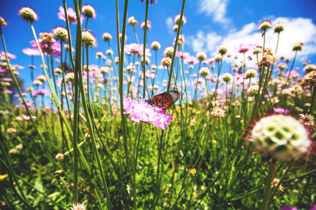 Kapstadt-Sehenswuerdigkeiten-Highlights-botanischer-garten-pflanzen