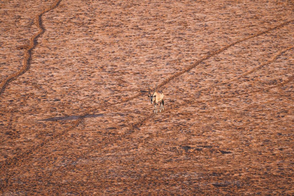 Xaus-Lodge-Aussicht-Salzpfanne-Antilopen