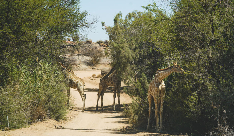 Augrabies Falls National Park Südafrika – Reisetipps & Infos