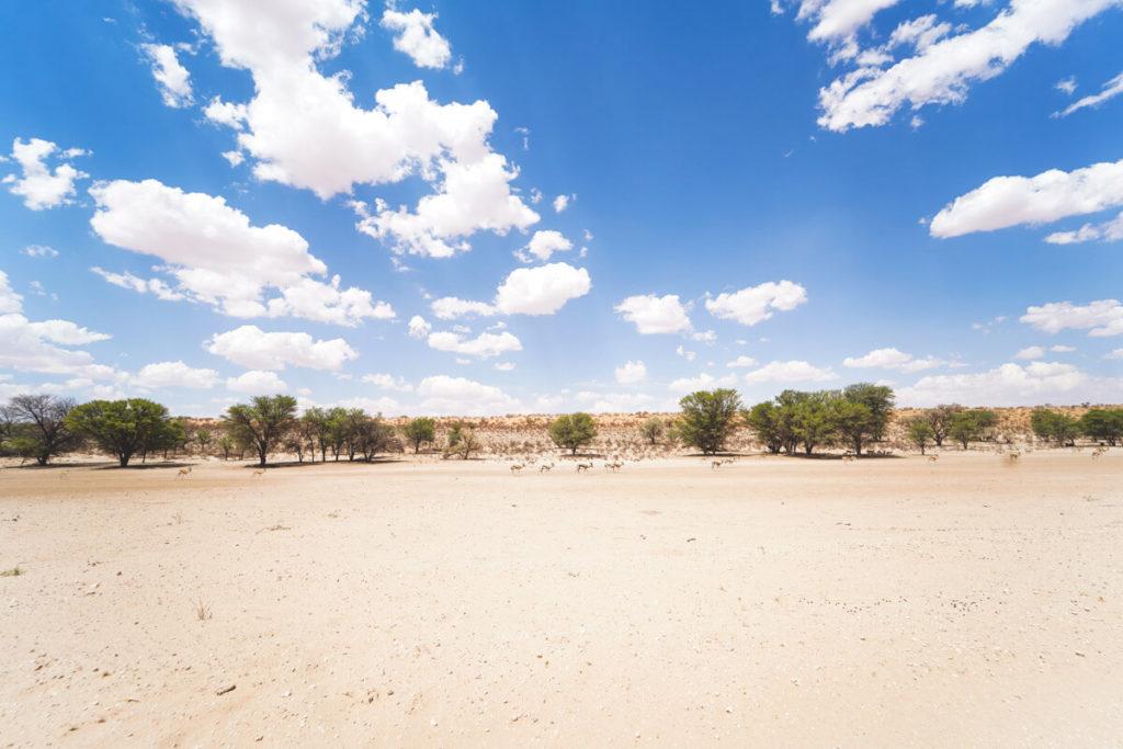 Kgalagadi-Transfrontier-National-Park-Auob-Flussbett