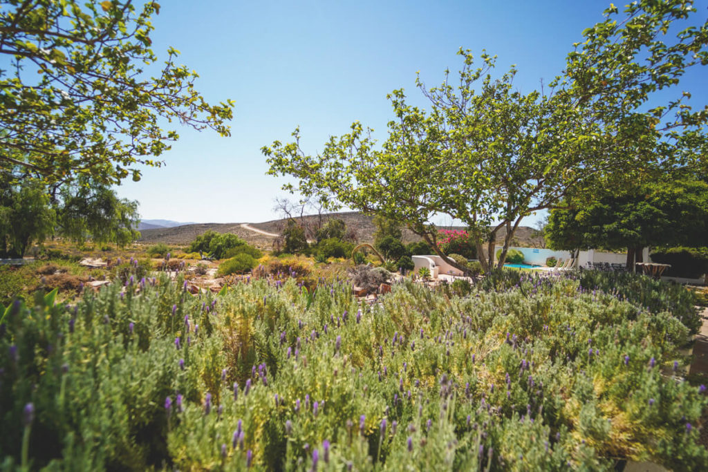 Namaqua-National-Park-Naries-Namakwa-Retreat-Garten-1