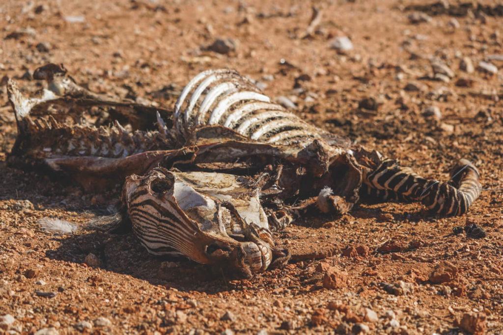 Suedafrika-Augrabies-Falls-National-Park-Zebra