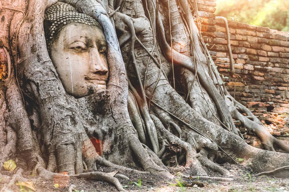 Thailand-Sehenswuerdigkeiten-Ayutthaya-Buddha-Baum