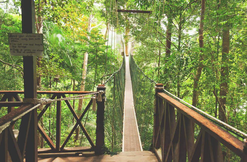 Malaysia Sehenswürdigkeiten - Taman Negara Park