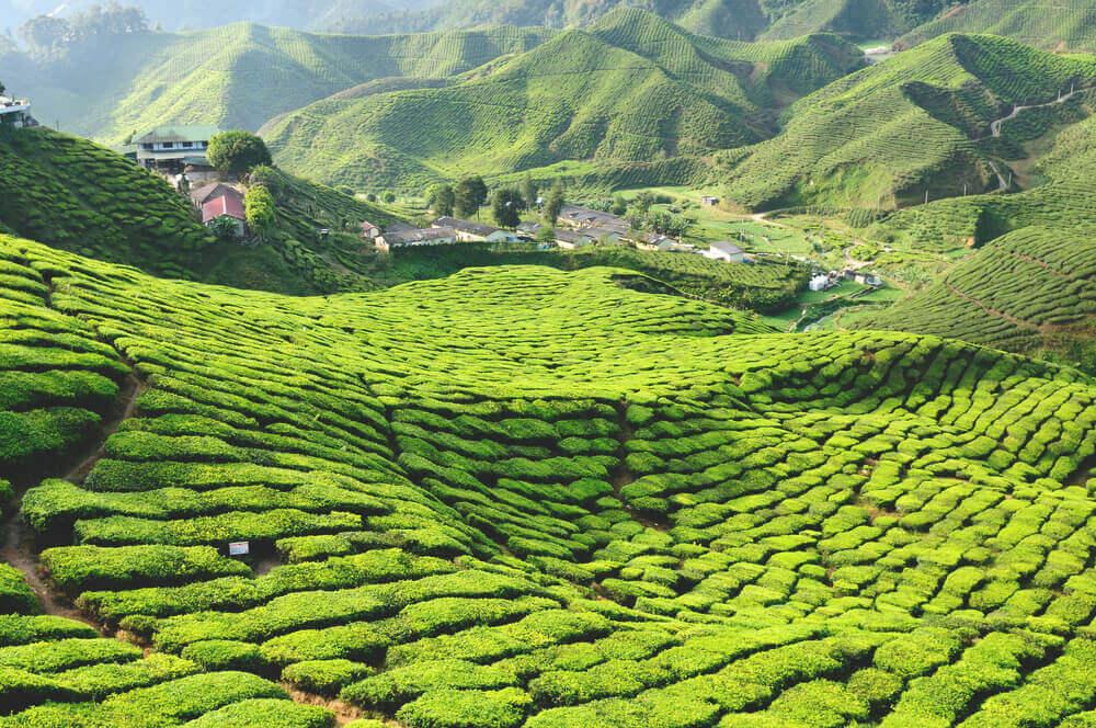 Teeplantagen Cameron Highlands Malaysia Sehenswuerdigkeiten
