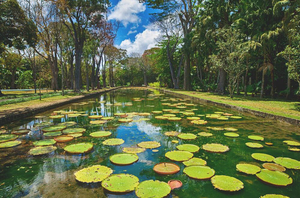 Sehenswürdigkeiten in Port Louis Pamplemousses Botanischer Garten