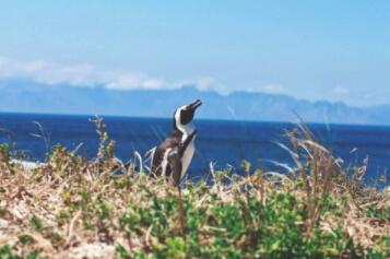 suedafrika-reiseblog-startseite-garden-route-tipps