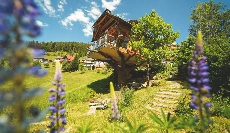 Baiersbronn im Schwarzwald – Wandern, Biken und Genießen