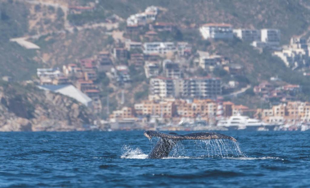 Baja-California-Mexiko-Cabo-San-Lucas-Buckelwal