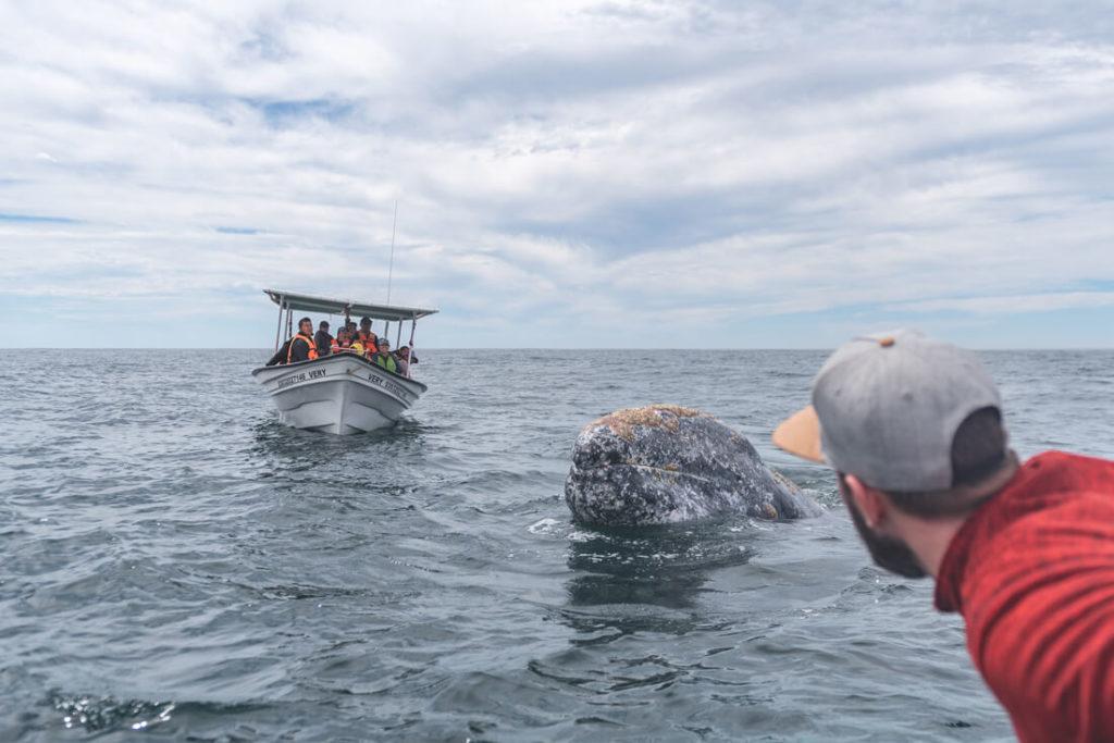 Baja-California-Mexiko-Magdalena-Bay-Grauwal-1