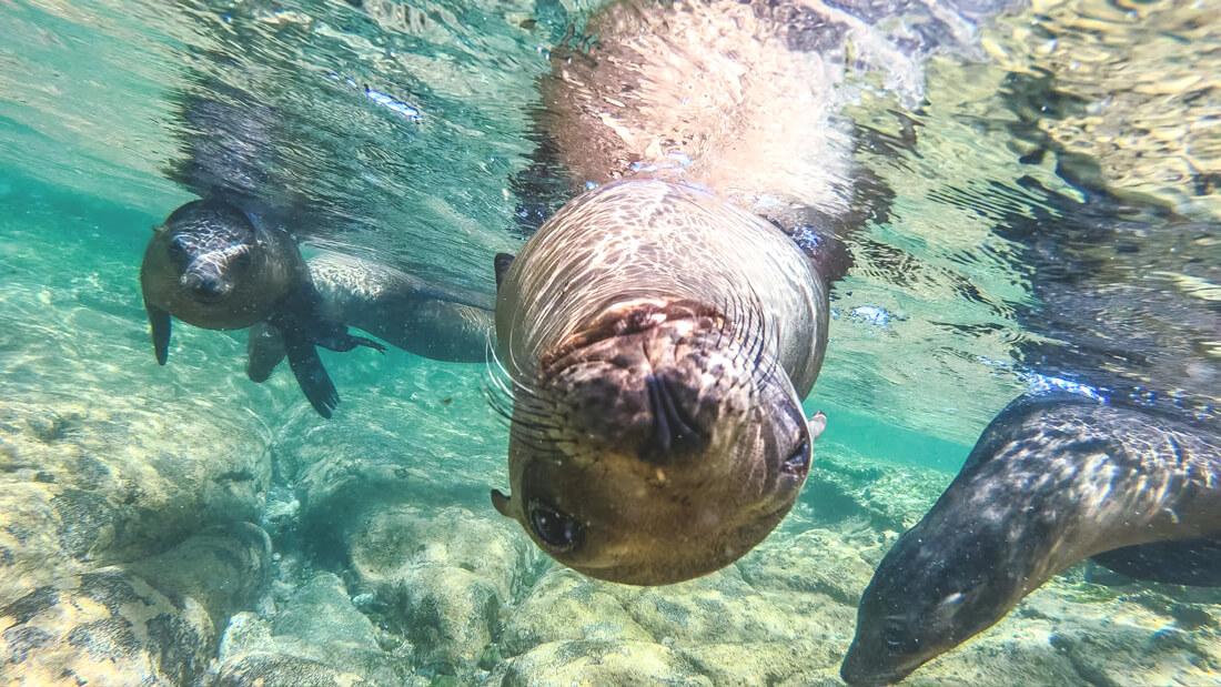 Baja California in Mexiko – Meine Reise zu den Giganten der Meere