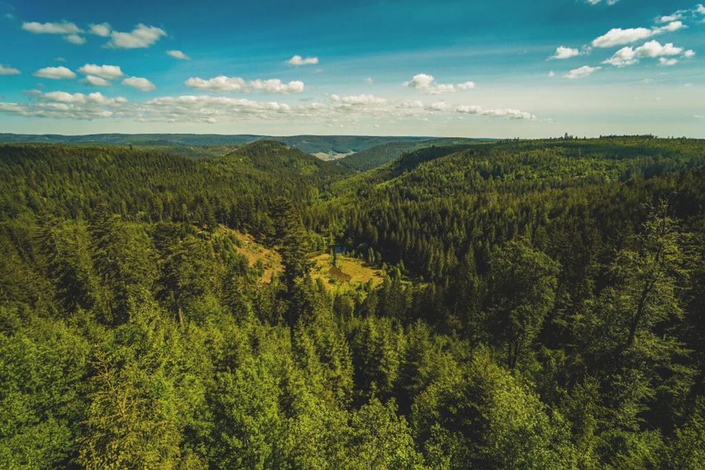 Ellbachsee-Ellbachseeblick-Aussichtsplattform-Baiersbronn-Schwarzwald-2