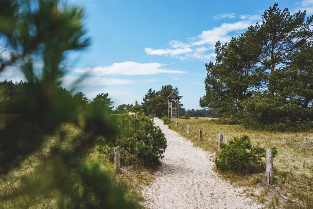 Fischland-Darss-Zingst-Nationalpark-Aussichtsplattform