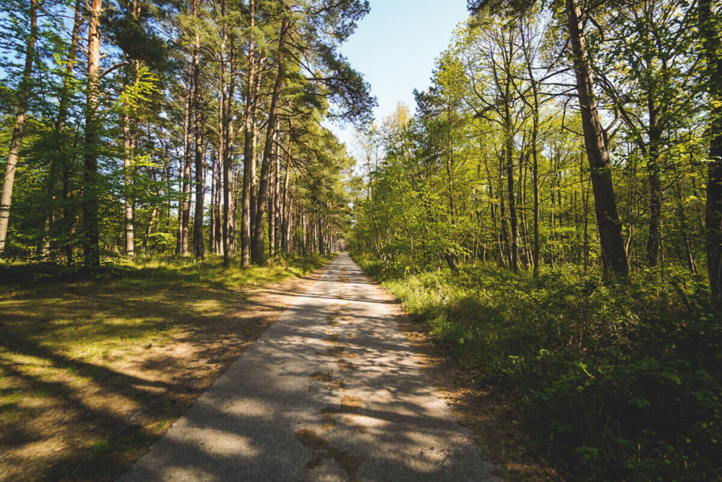 Fischland-Darss-Zingst-Wanderung-Nationalpark