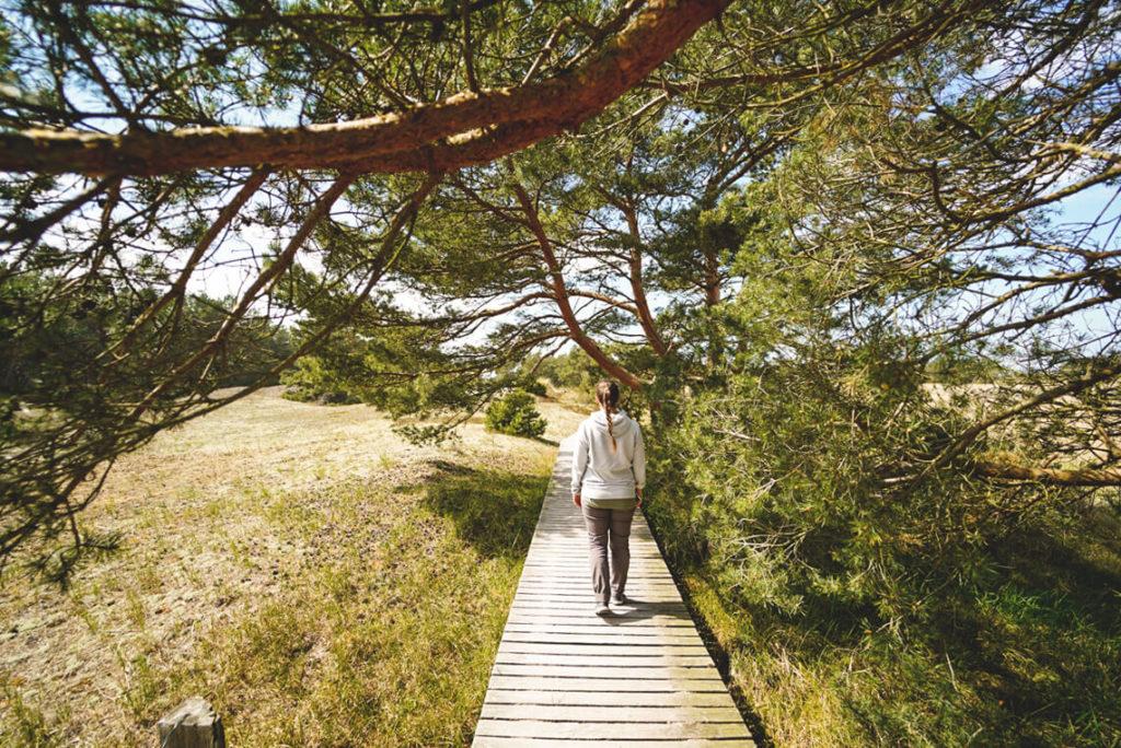 Holzweg-Nationalpark-Vorpommersche-Boddenlandschaft-Fischland