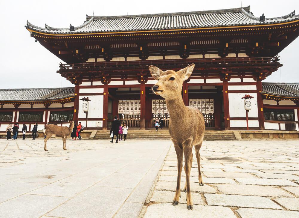 Japan-Rundreise-Tipps-Osaka-Rehe-Nara-Park