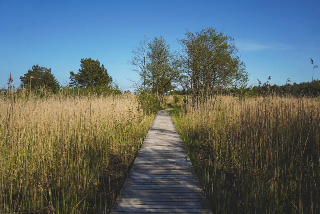 Nationalpark-Vorpommersche-Boddenlandschaft-Holzsteg-Fischland-Darss