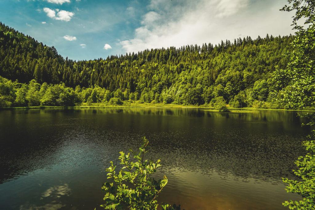 Sankenbachsee-Baiersbronn-Schwarzwald