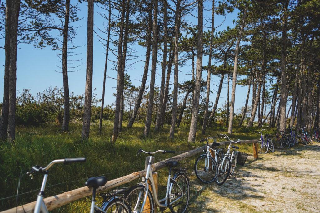 Hiddensee-Fahrrad-Strand-Duenen