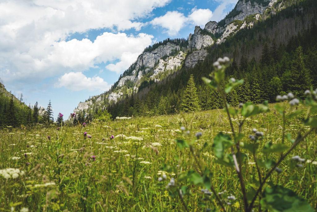 Hohe-Tatra-Polen-Tal-Dolina-Koscieliska-1