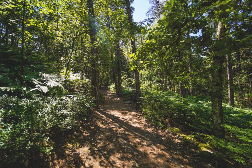 Pfaffenstein-Wanderwege-zur-Barbarine