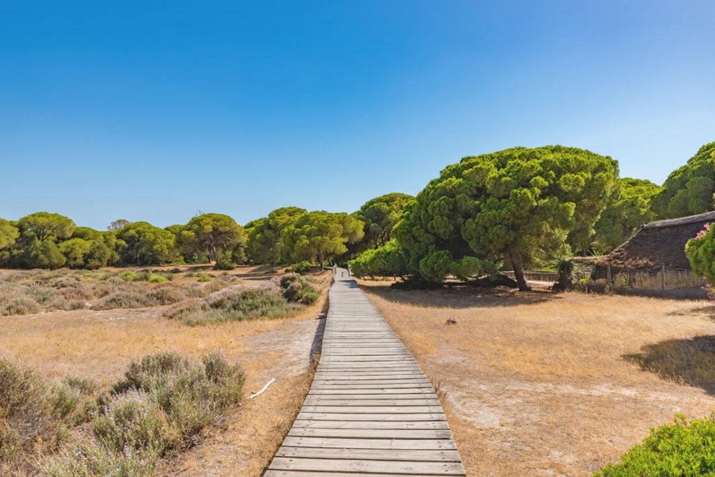 Andalusien Sehenswürdigkeiten - Nationalpark Donana in Spanien