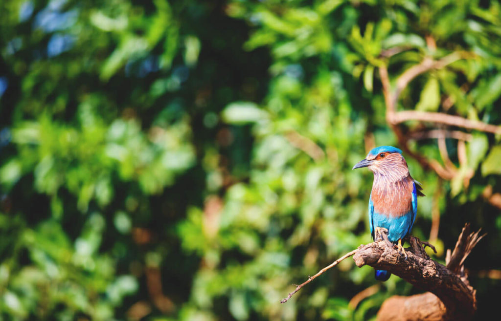 Sri-Lanka-Highlights-Udawalawe-Nationalpark