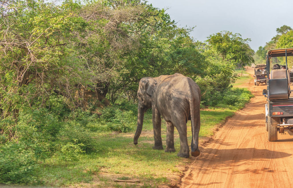 Sri-Lanka-Sehenswuerdigkeiten-Yala-Nationalpark-Elefanten