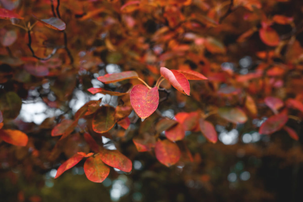 Wochenende-in-Stuttgart-schlosspark-Herbst