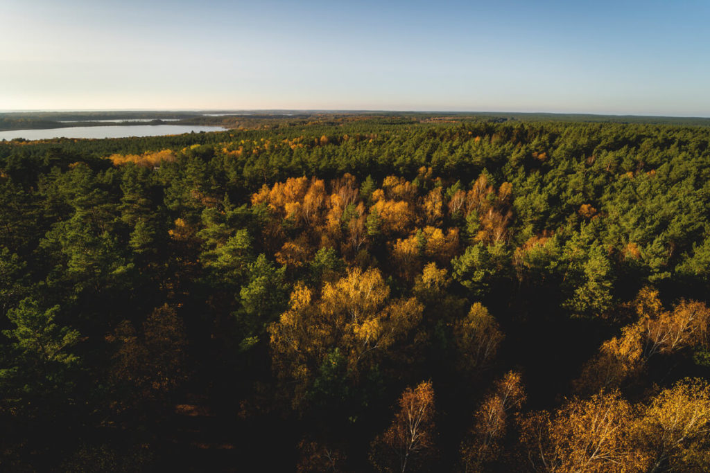 Aussicht-Kaeflingsbergturm-Mueritz-Nationalpark-Herbst