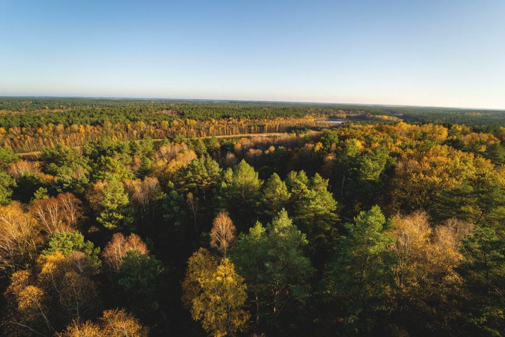 Kaeflingsbergturm-Aussicht-Wald-Mueritz-Nationalpark