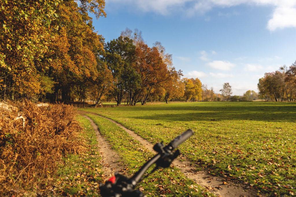 Mueritz-Nationalpark-Fahrradtour-Radweg