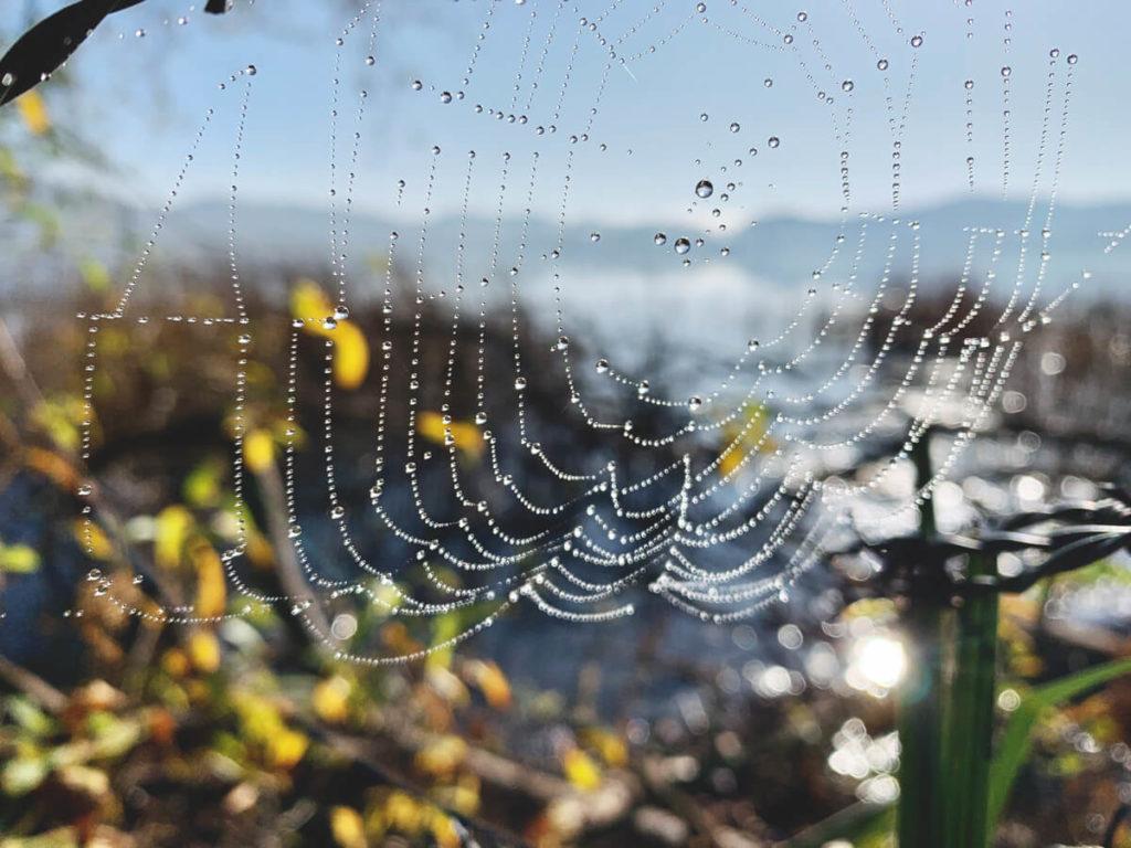 Wandern-Eifel-Natur-Spinnennetz-Tau