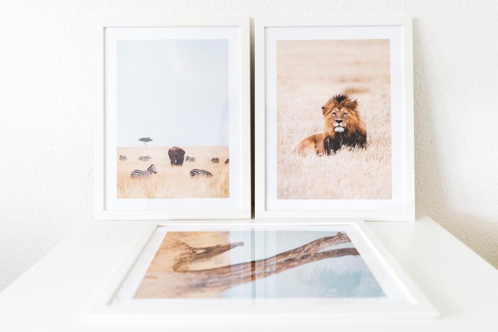 Desenio Poster Afrika Südafrika Löwe Elefant Gepard