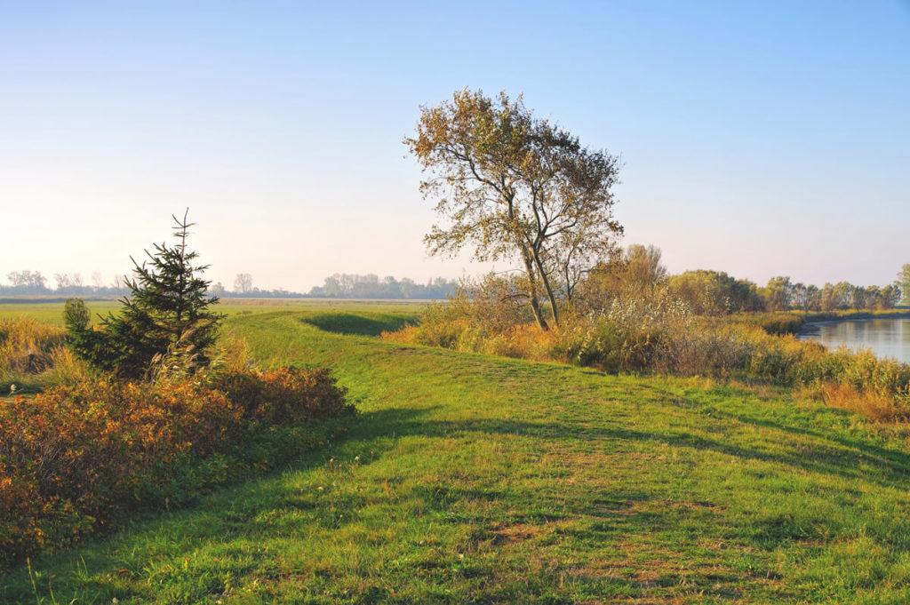Insel-Ummanz-Natur-Ruegen