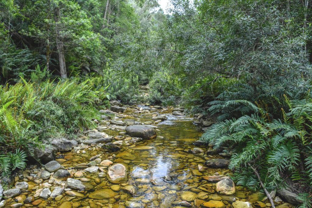 Knysna-Sudafrika-Forest-Wald-urwald