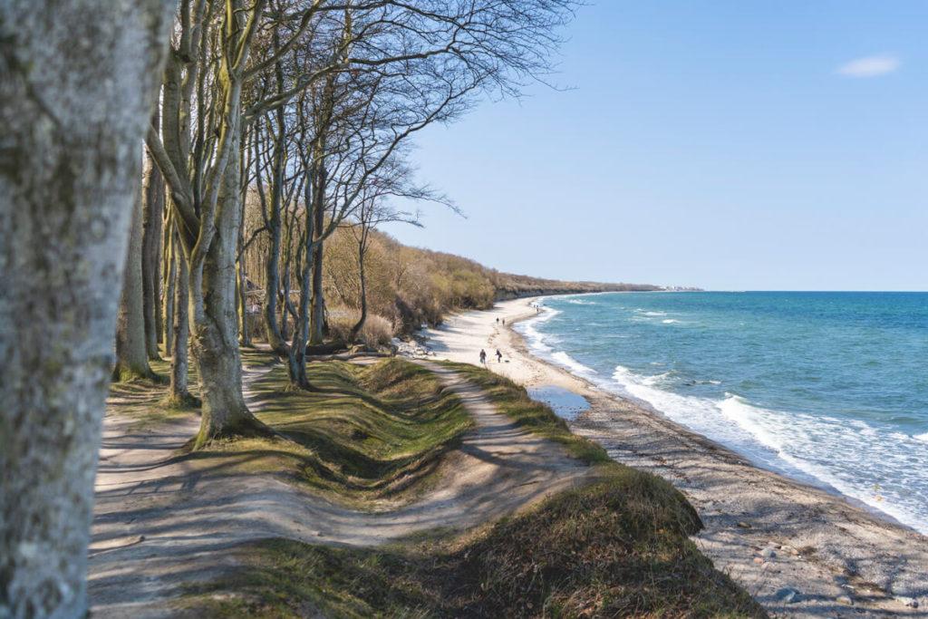 Ostseebad Heiligendamm Gespensterwald Ostseeküstenradweg