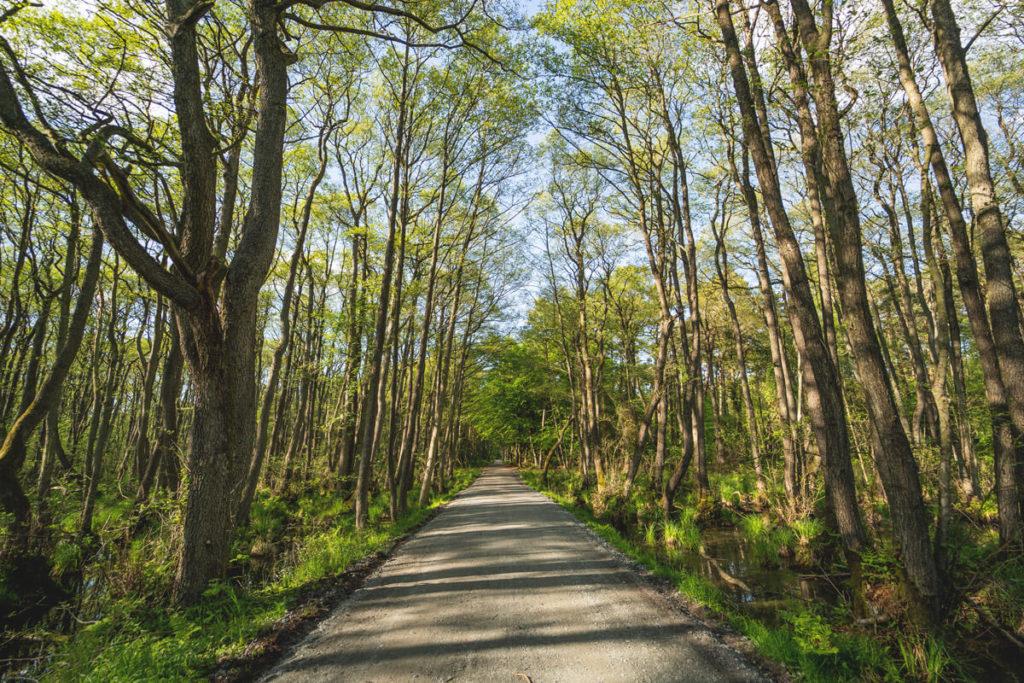 Darsser-Urwald-Fahrradtour-Fischland