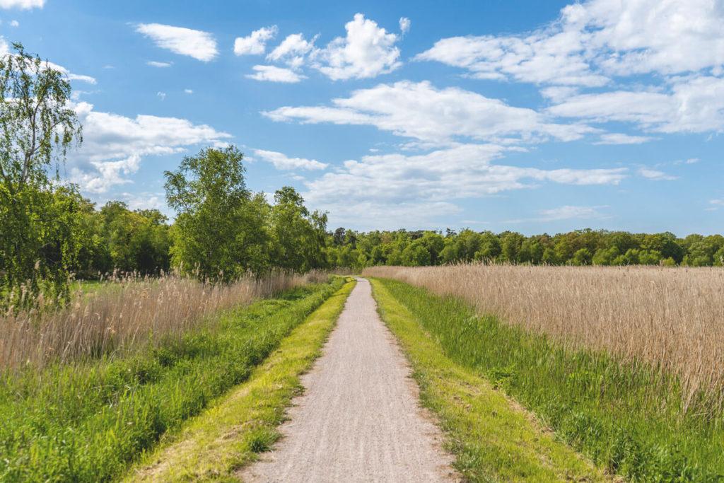 Fischland-Darss-Fahrradtour-Wiek