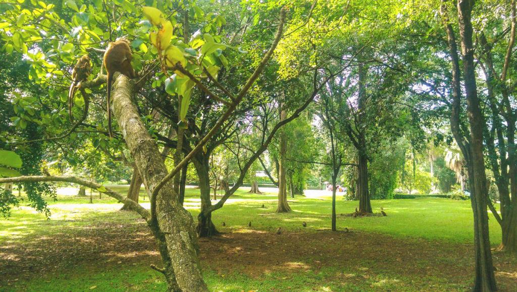 Rundreise-Sri-Lanka-Kandy-Affen